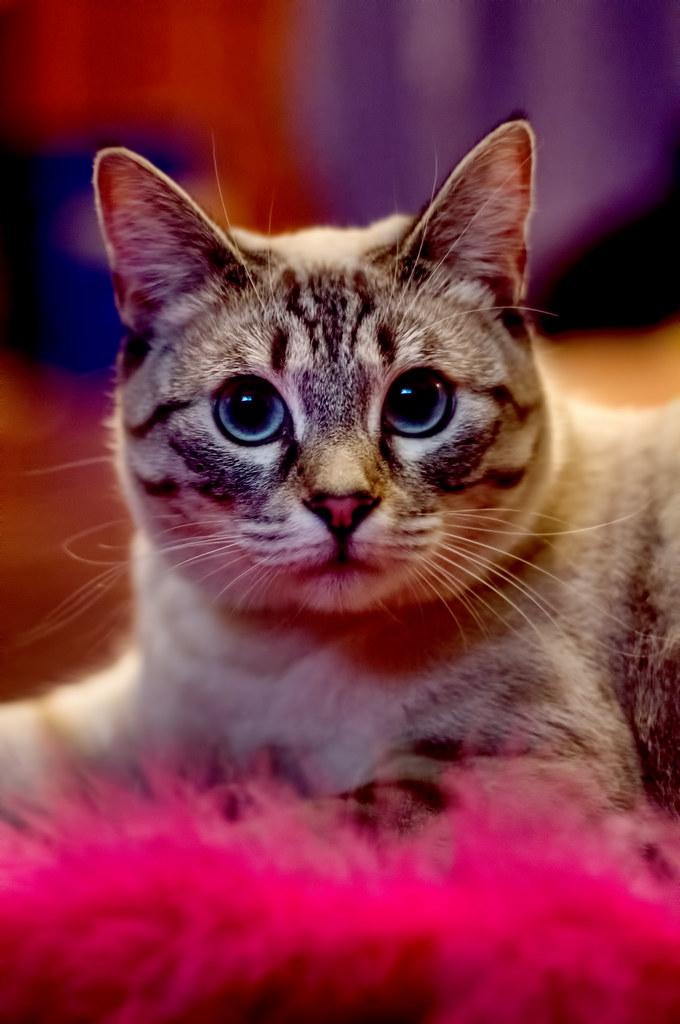 Kitty katrina cam
