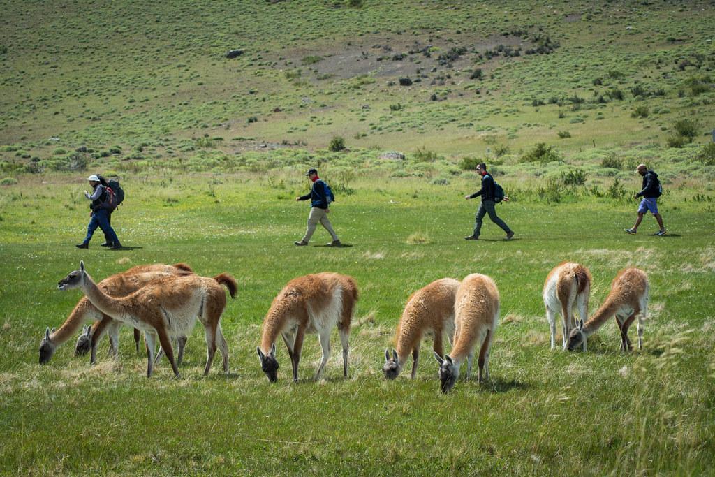 Fauna Trail (