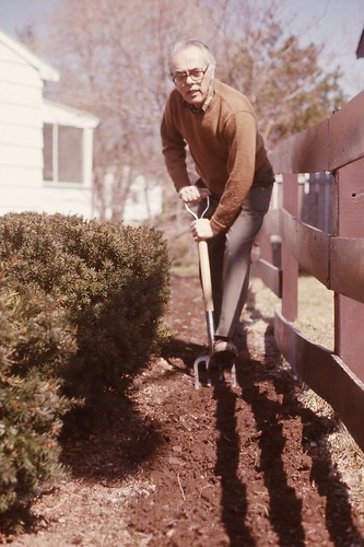 Dad working in the yard