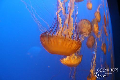160703c Deep Sea _28