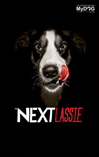 Lassie Dog Food Coupon