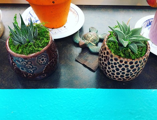 Surrendered to the succulent craze. These little guys were too cute to pass up.