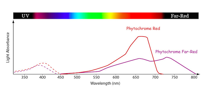 Terms Of Use >> Phytochrome Absorption Spectrum | Line graph showing the rel… | Flickr