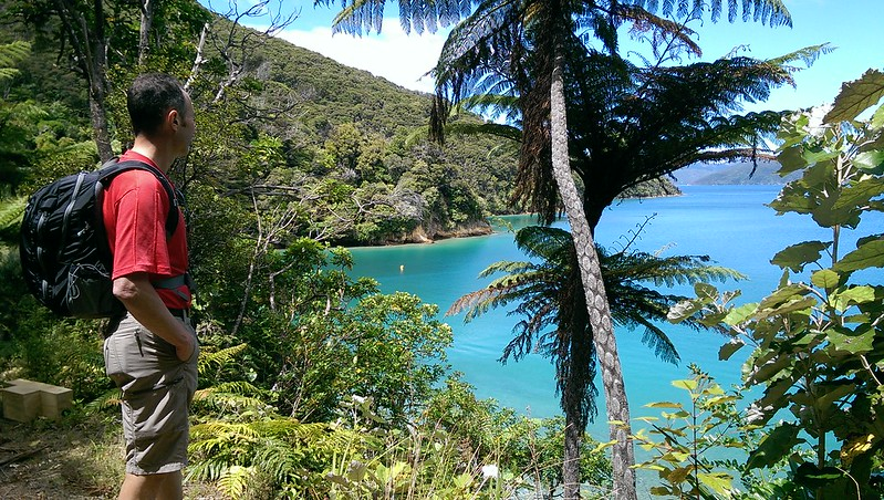 walking on the queen charlotte track looking into the marlborough sounds
