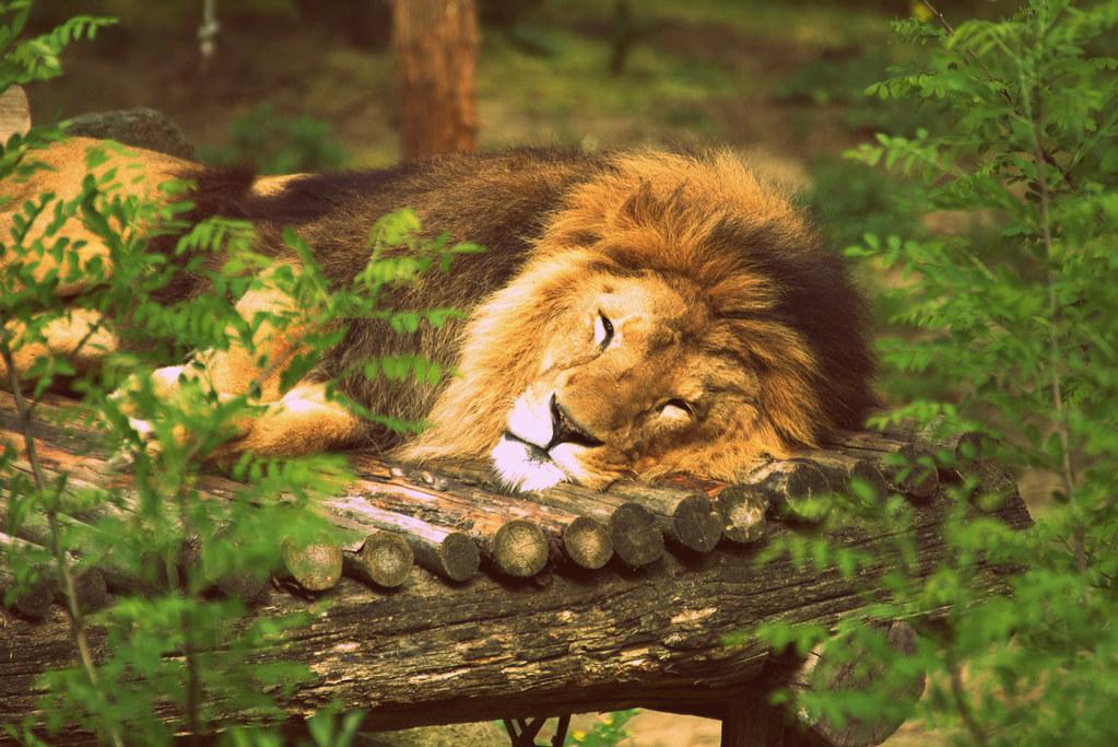 Der König schläft