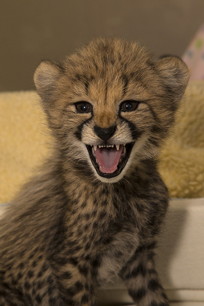 animals funny cubs smiling - photo #3