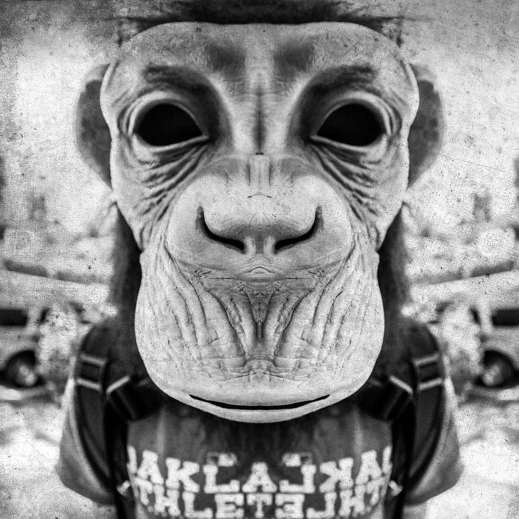 Suburban Monkey