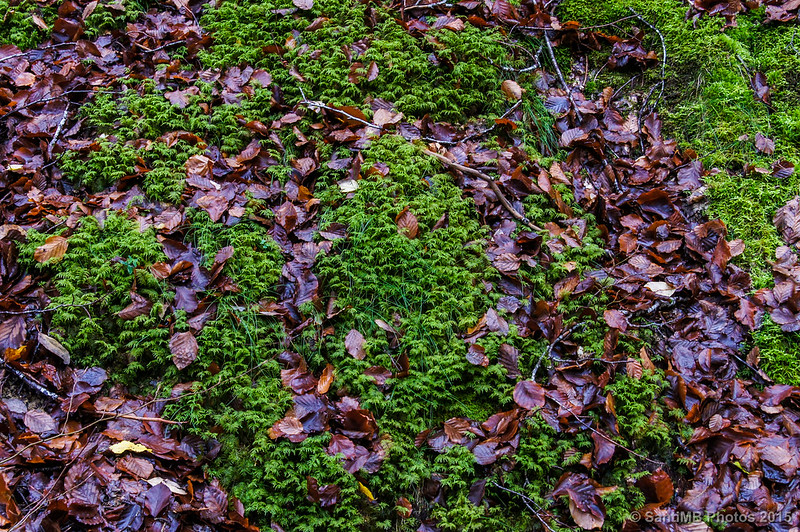 Tapiz de hojas y musgo