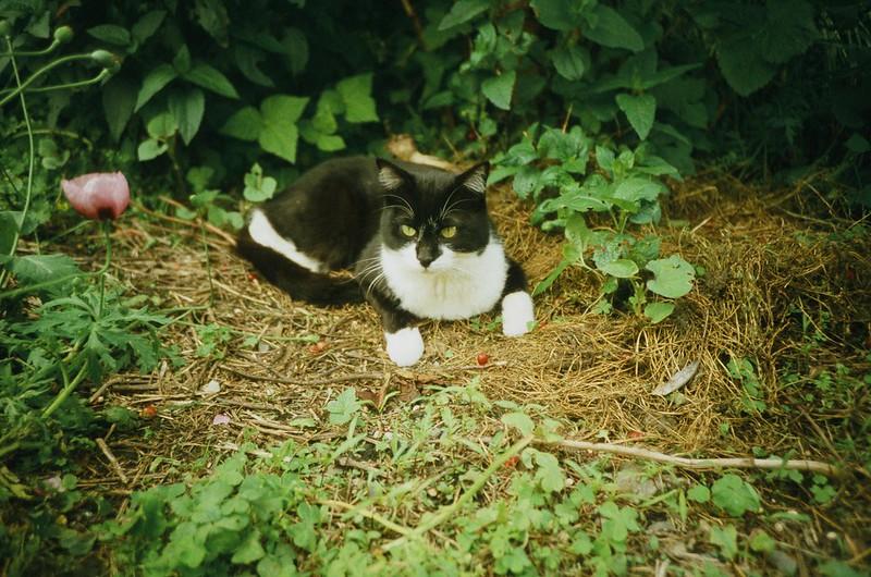 lomography: Cat