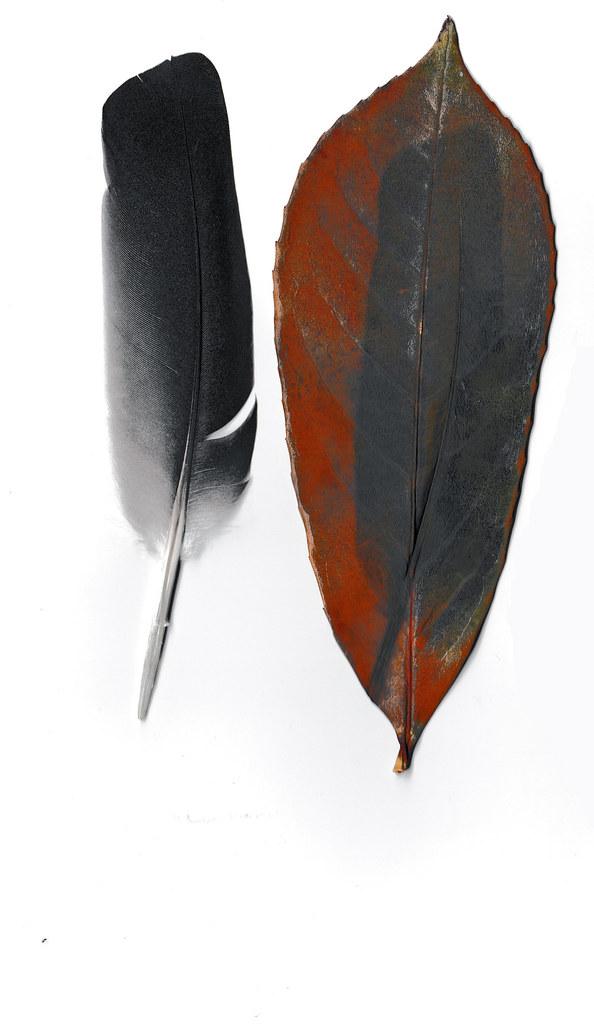 Federschatten -- Shadow of a feather