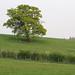 Oak, Theydon Bois