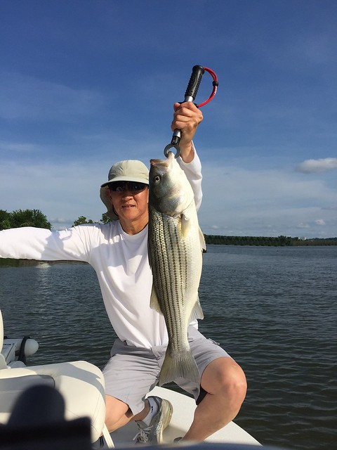 Photo courtesy of Smiley Hsu, holding a striped bass