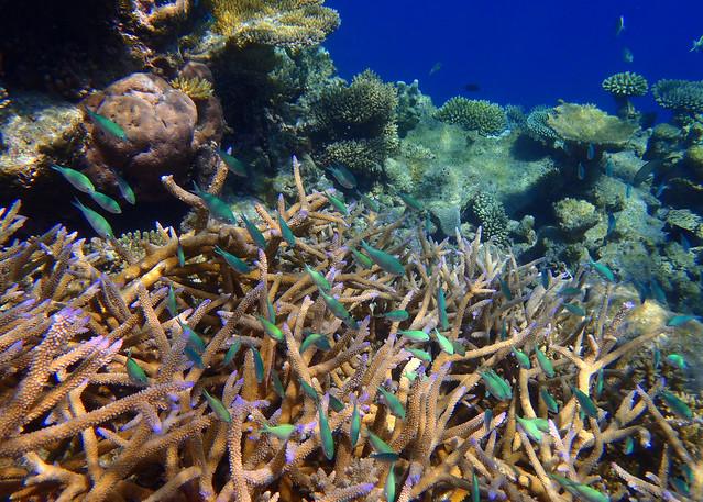 Peces de colores bajo el agua de la isla desierta de Odagalla en Maldivas