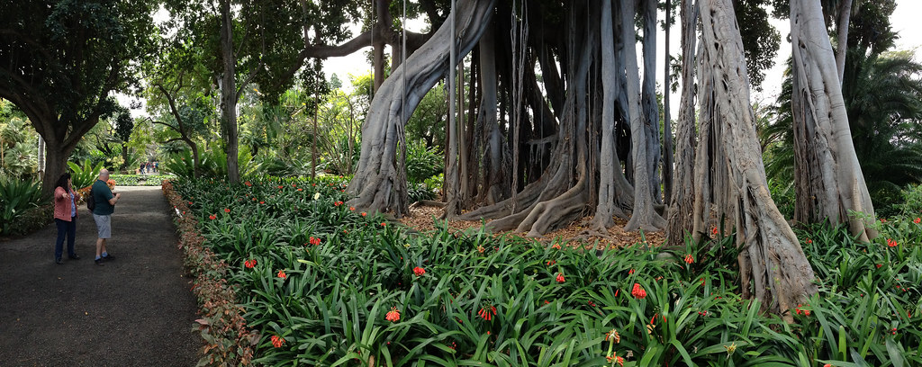 Tenerife orotava botanische tuin ben ter mull flickr for Botanische tuin tenerife