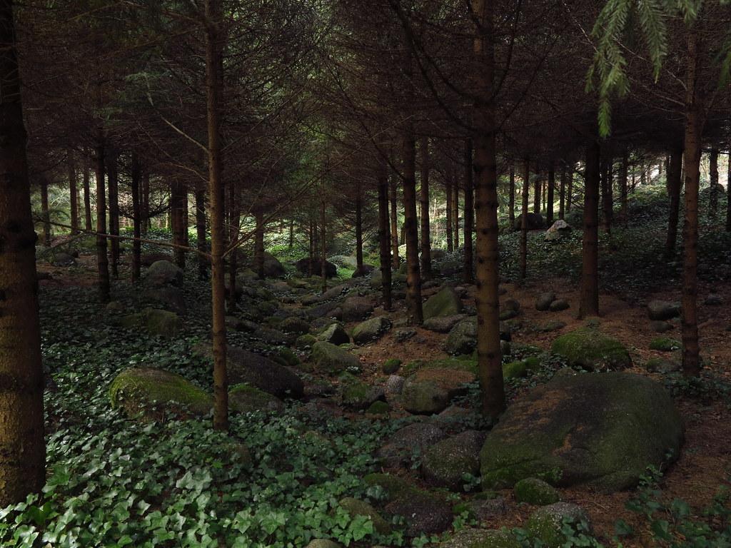Jardin albert kahn for t vosgienne la for t vosgienne for Jardin foret