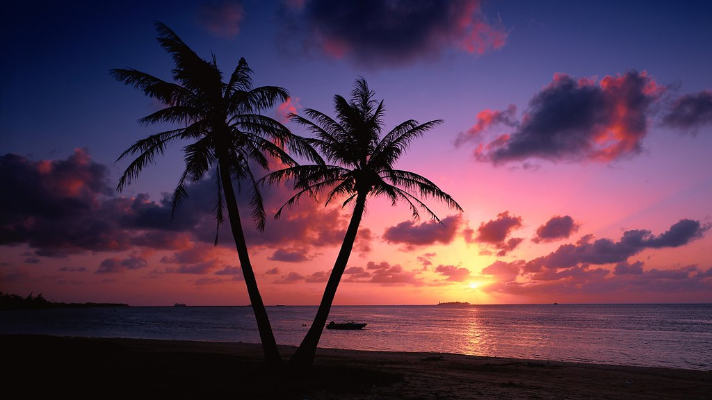 Beach Palm Tree Sunset Wallpaper Beautiful Beach Sunsets Palm