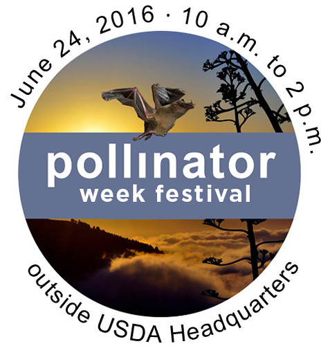 National Pollinator Week Festival graphic