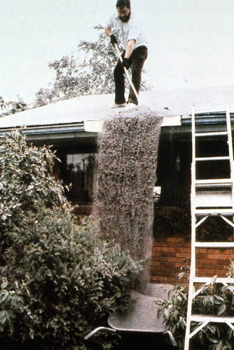 Image shows a man in a pale shirt and black pants, standing on his roof and sweeping ash over the edge. The ash is falling in a curtain like a waterfall. Beside it is his ladder. In front of it are some ash-covered bushes.