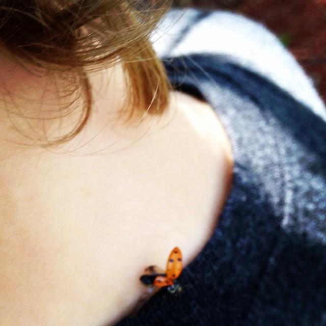 Snuggly ladybug