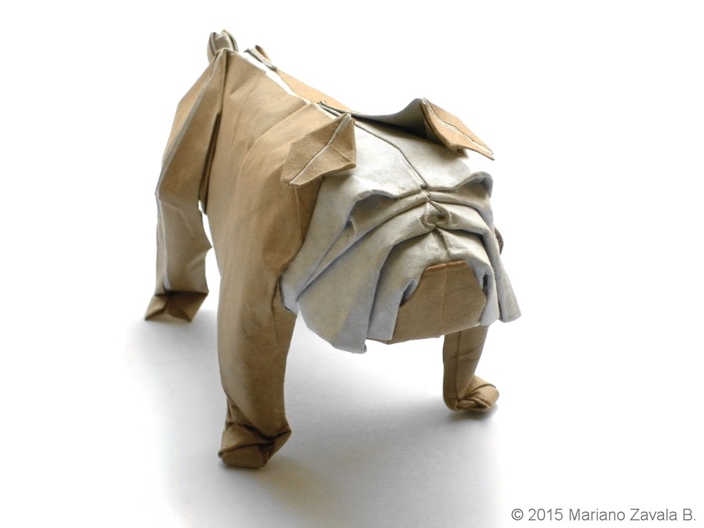 Bulldog - Mariano Zavala B. | Paper: Light Brown Leather ... - photo#15