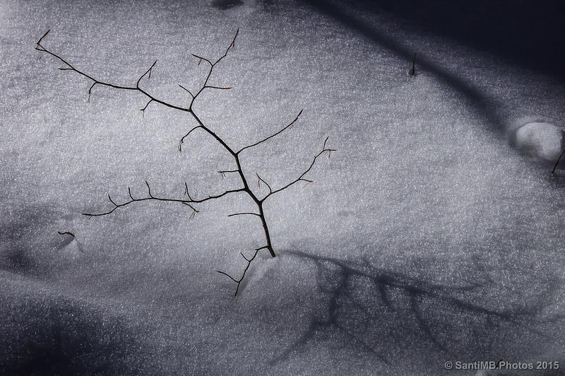 La rama y su sombra