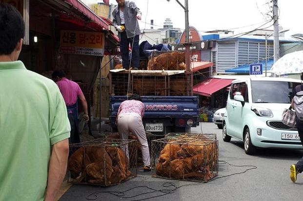 Busan Gupo Market7