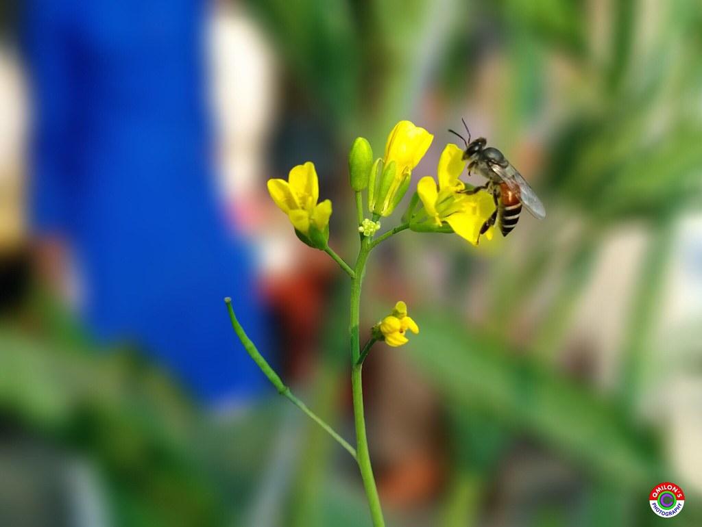Beautiful english flower garden - Bee Flowers Plants Amp Garden Flowers Nature And Beauty Bee
