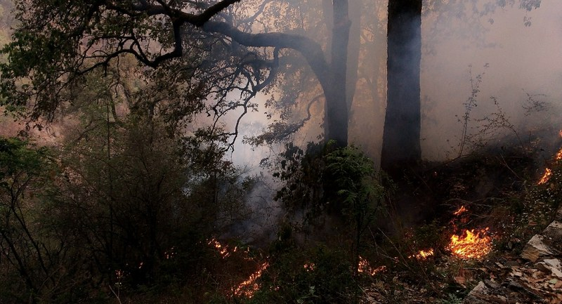Fire in an oak forest in Uttarakhand. (Photo courtesy: Rajkamal Goswami).