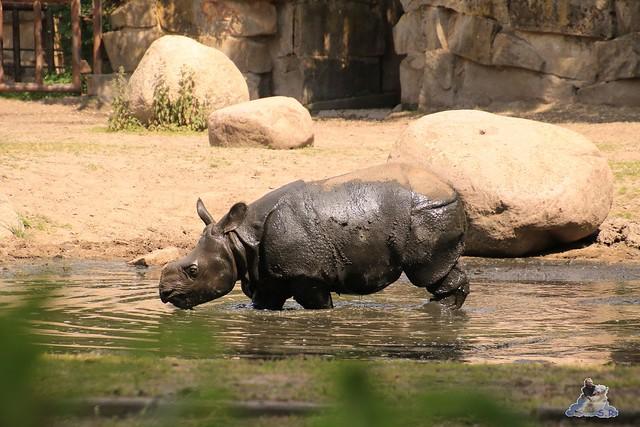 Tierpark Berlin 29.05.2016   0131