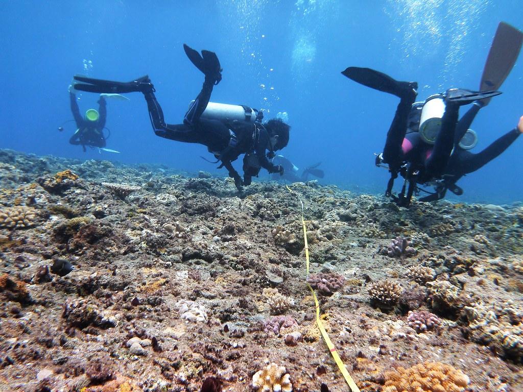 台灣環境資訊協會與潛水志工每年固定到蘭嶼進行珊瑚礁體檢。攝影:蕭伊貞。