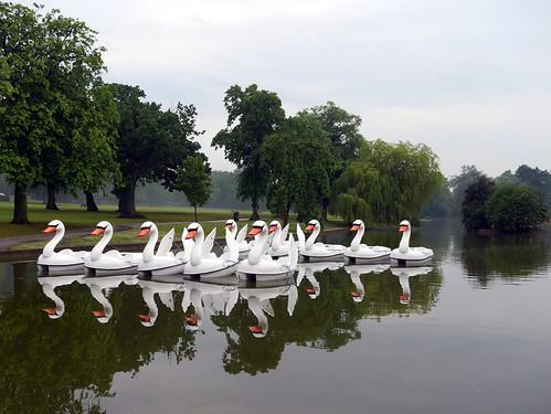 Swan Pedalos