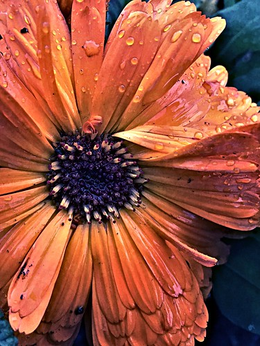 Color of flower