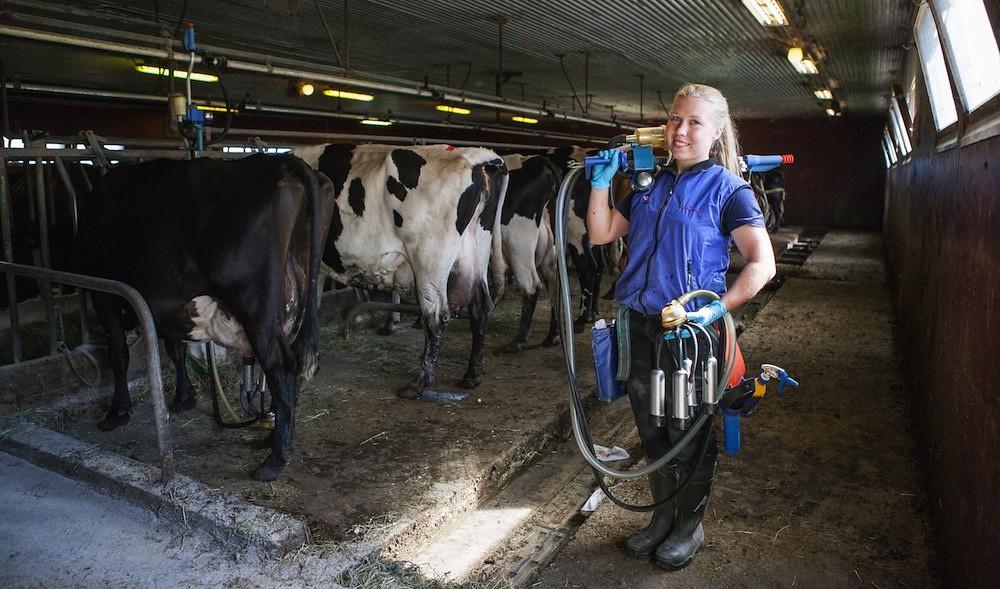 Farmgirl Milking Nor Farm Flickr