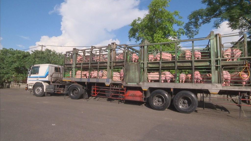 非洲豬瘟在境內失控的原因中,設備與運輸車輛的流動是最容易讓人忽略的部分。圖片來源:公共電視 我們的島〈豬的最後一哩路〉