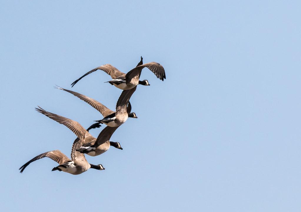 Synchronized Flight!