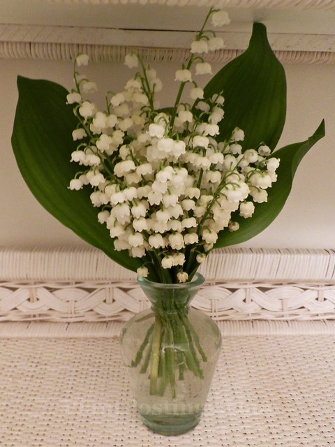 lily of valley 1