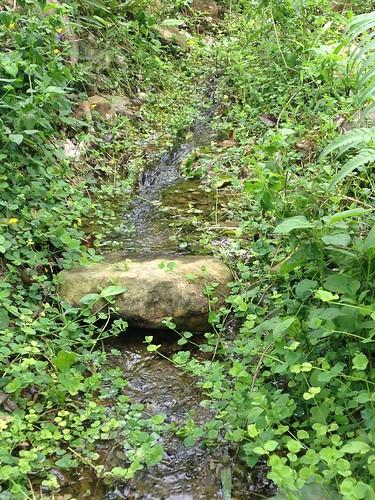 阿稼婆以生態池復育台灣白魚。攝影:廖靜蕙