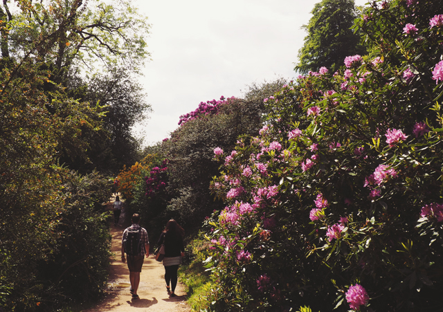 Rhododendrons at Stourhead