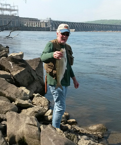 Tight lined tales of a fly fisherman maryland weekly for Md fishing report point lookout