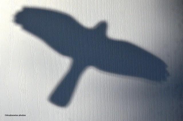 Shadow of the bird