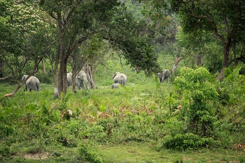 jungle full of elephants