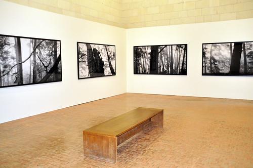 """Fotoausstellung """"D'une fôret l'autre"""". Während unseres Besuches werden im Schloss von Chambord Fotografien des heute größten koreanischen Künstler-Fotografen gezeigt: Baen Bien-U, geboren 1950, ausgebildet in klassischer Malerei und Graphikdesign, ist als Fotograf Autodidakt. Vom Frühjahr 2014 bis Frühjahr 2015 hat er sich mehrere Male in Chambord aufgehalten. In den historischen Gemäuern des Schlosses wirken die großformatigen Bilder, die aus dem Pinienwald von Gyeongju im Süden der koreanischen Halbinsel stammen, besonders beeindruckend. Typische Waldgeräusche wie Vogelgezwitscher runden die Ausstellung ab. Foto: Brigitte Stolle 2016"""