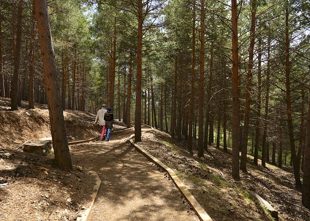 Sendero precioso por los bosques de pinos de la Alpujarra y el Puerto de la Ragua tras los trineos de perros