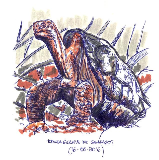 Tortuga gigante de Galápagos (Complejo Chelonoides nigra)
