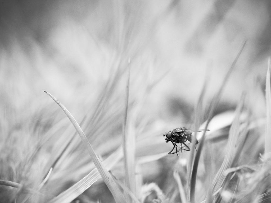 Tranquille dans les herbes. 26880729762_33286bc8f4_b
