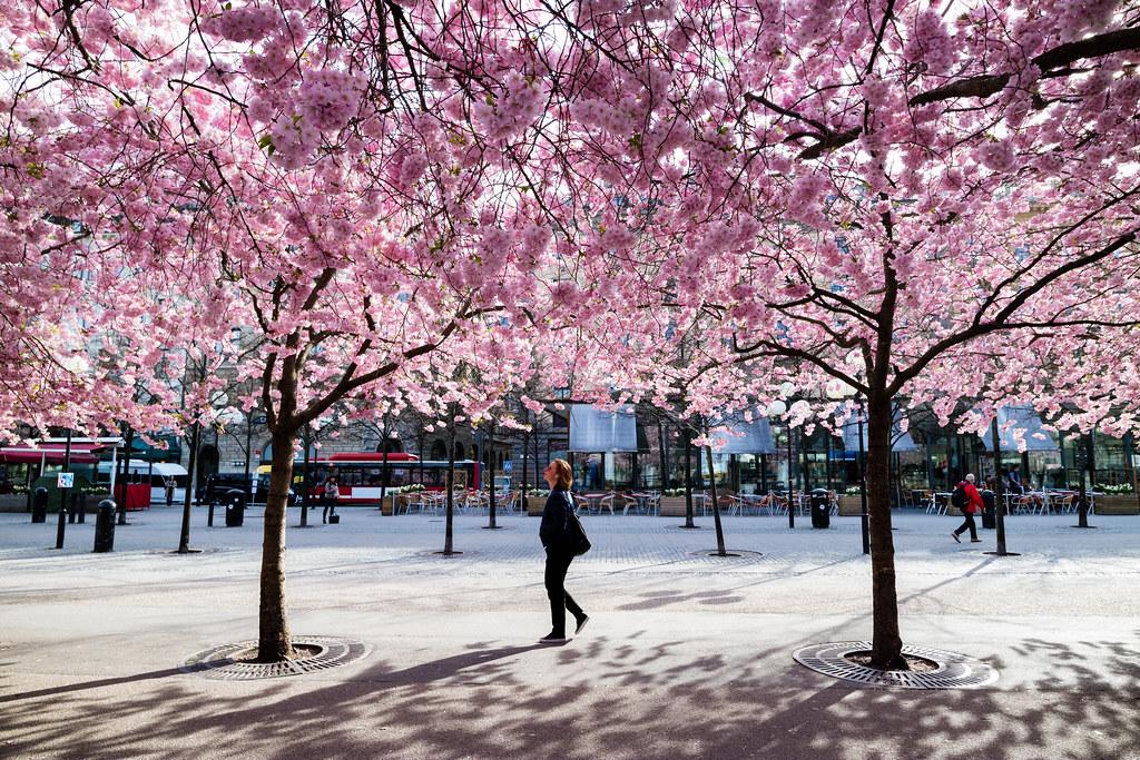 Kungsträdgården, Stockholm, April 22, 2015