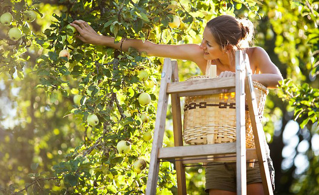 young-girl-fruit-picking-sunny-day