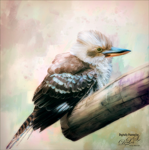 Painted image of a Laughing Kookaburra at the West Palm Beach Zoo