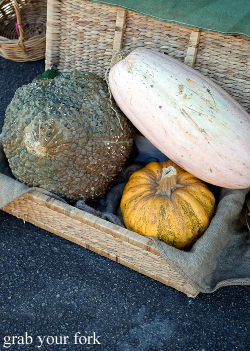 Gourds at the Canterbury Foodies and Farmers Market, Sydney