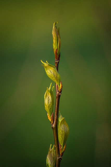 Spring, Green, Leaves, Twig, Branch, Growth